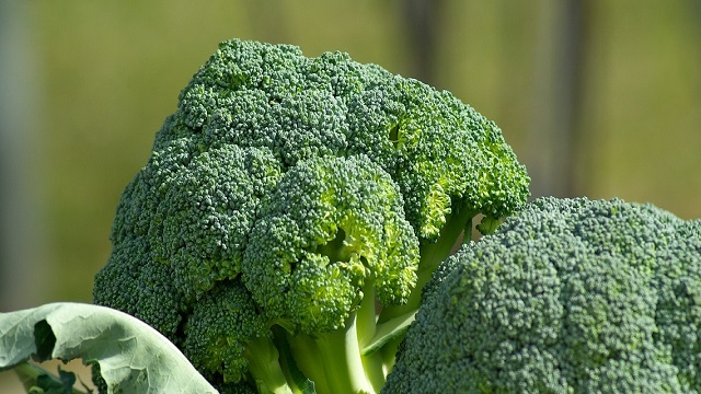 vegetables-broccoli